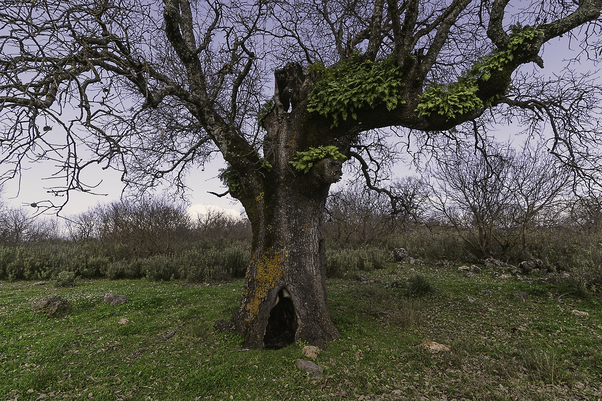 Xeromero Oak Woodland