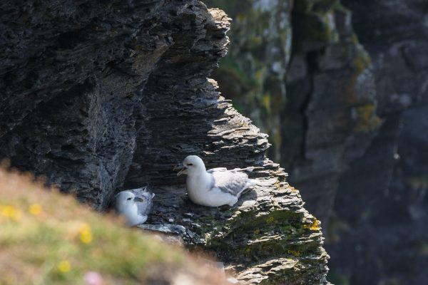 A couple of seagulls has find shelter inside the rocks