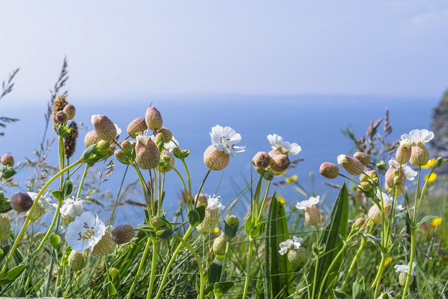 A bunch of flowers on the ege of the cliffs