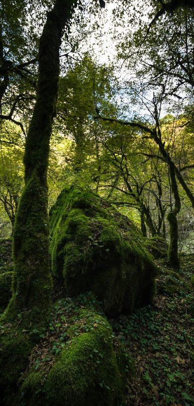 Vikos forest