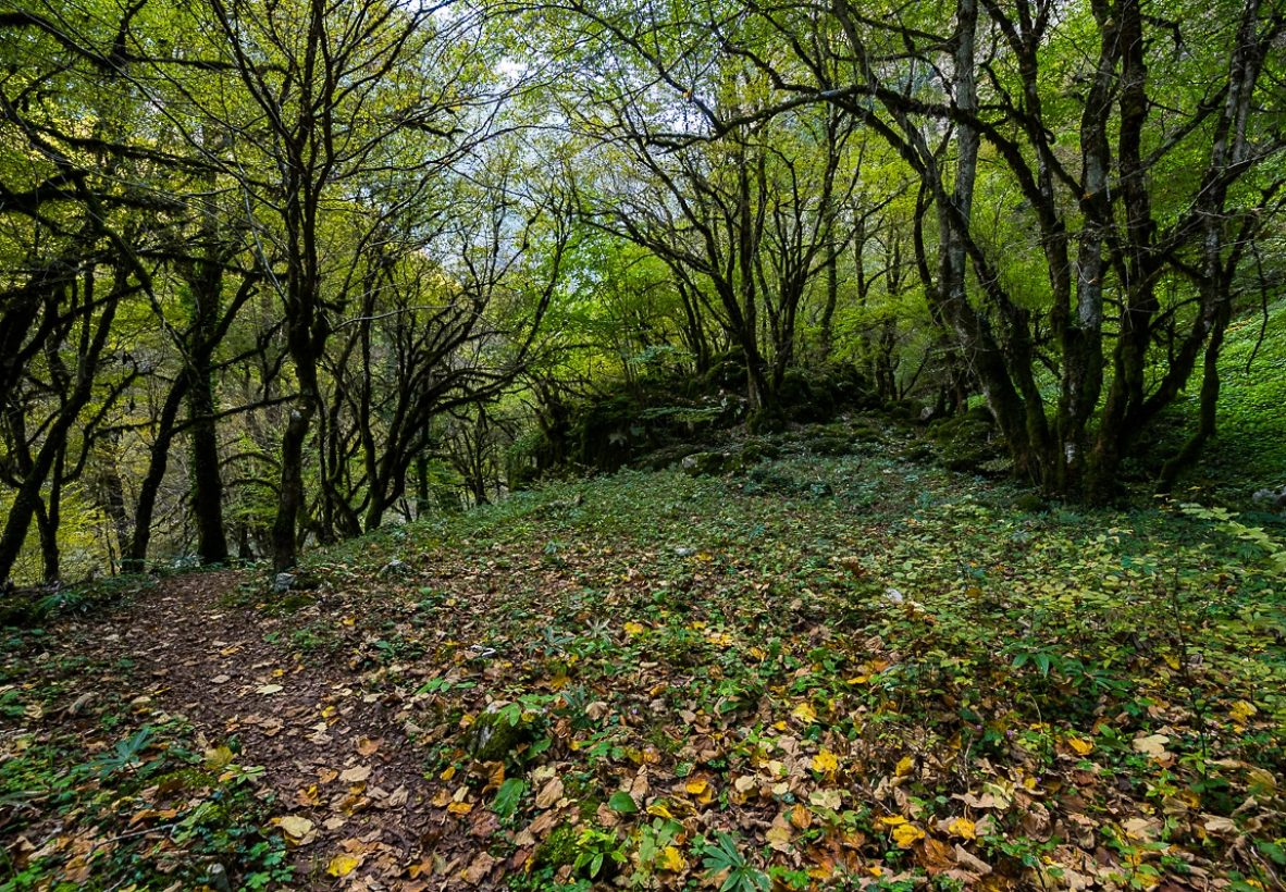 Vikos Gorge Hike forest 5