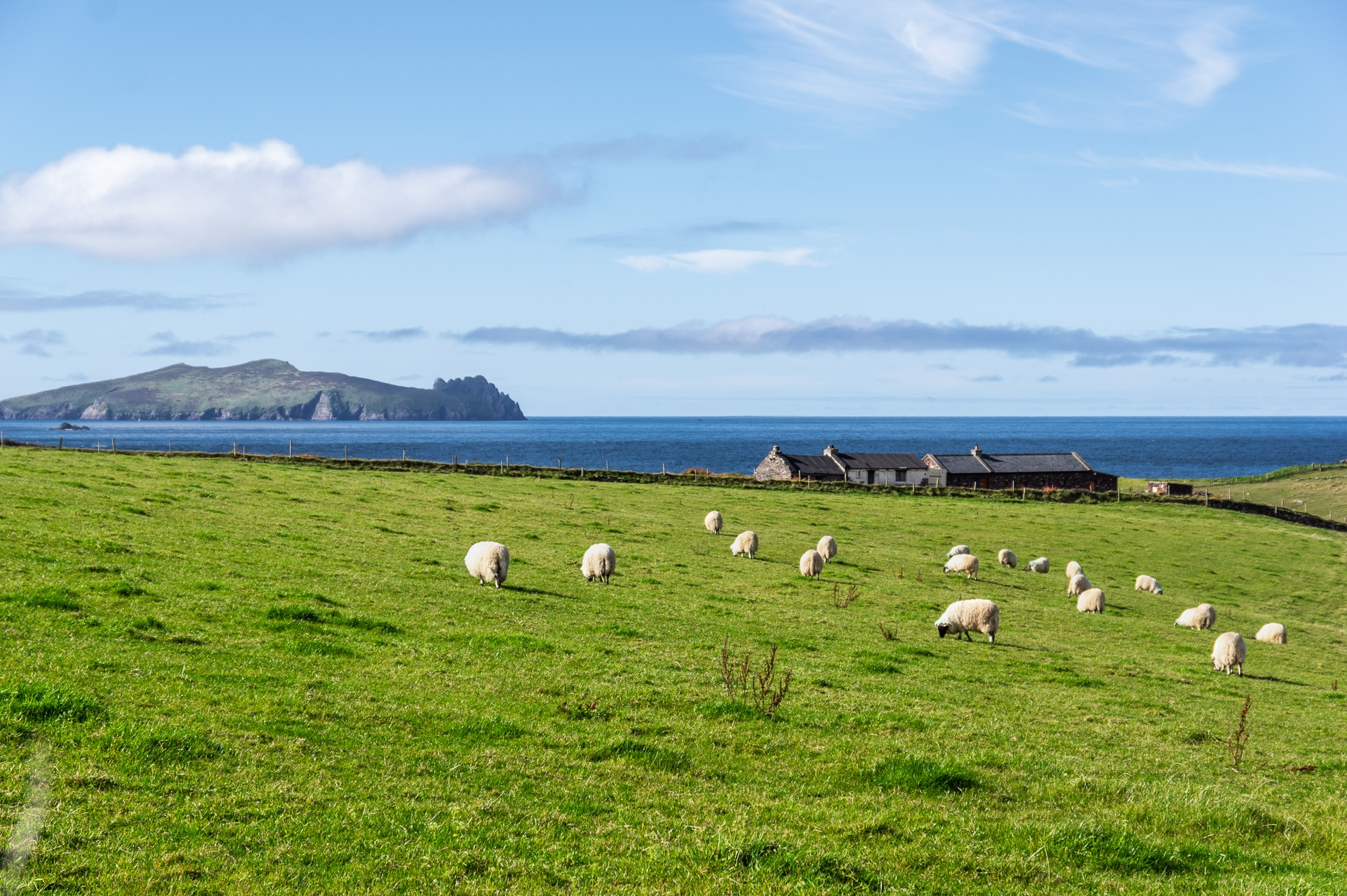 sheep on a meadow with sleeping island giant in the background