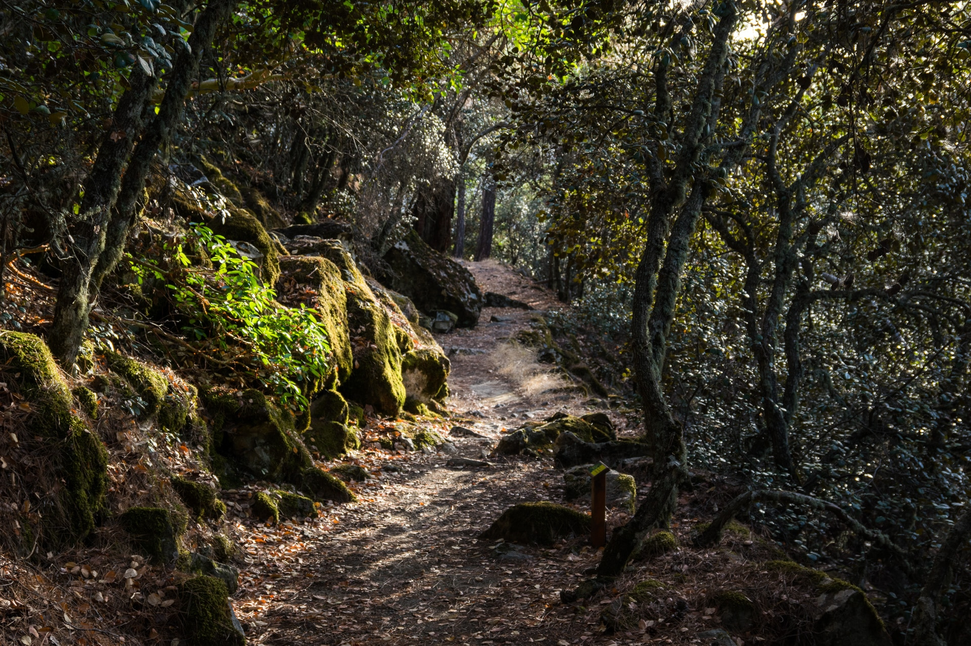 the trail of Madari through Black Forests