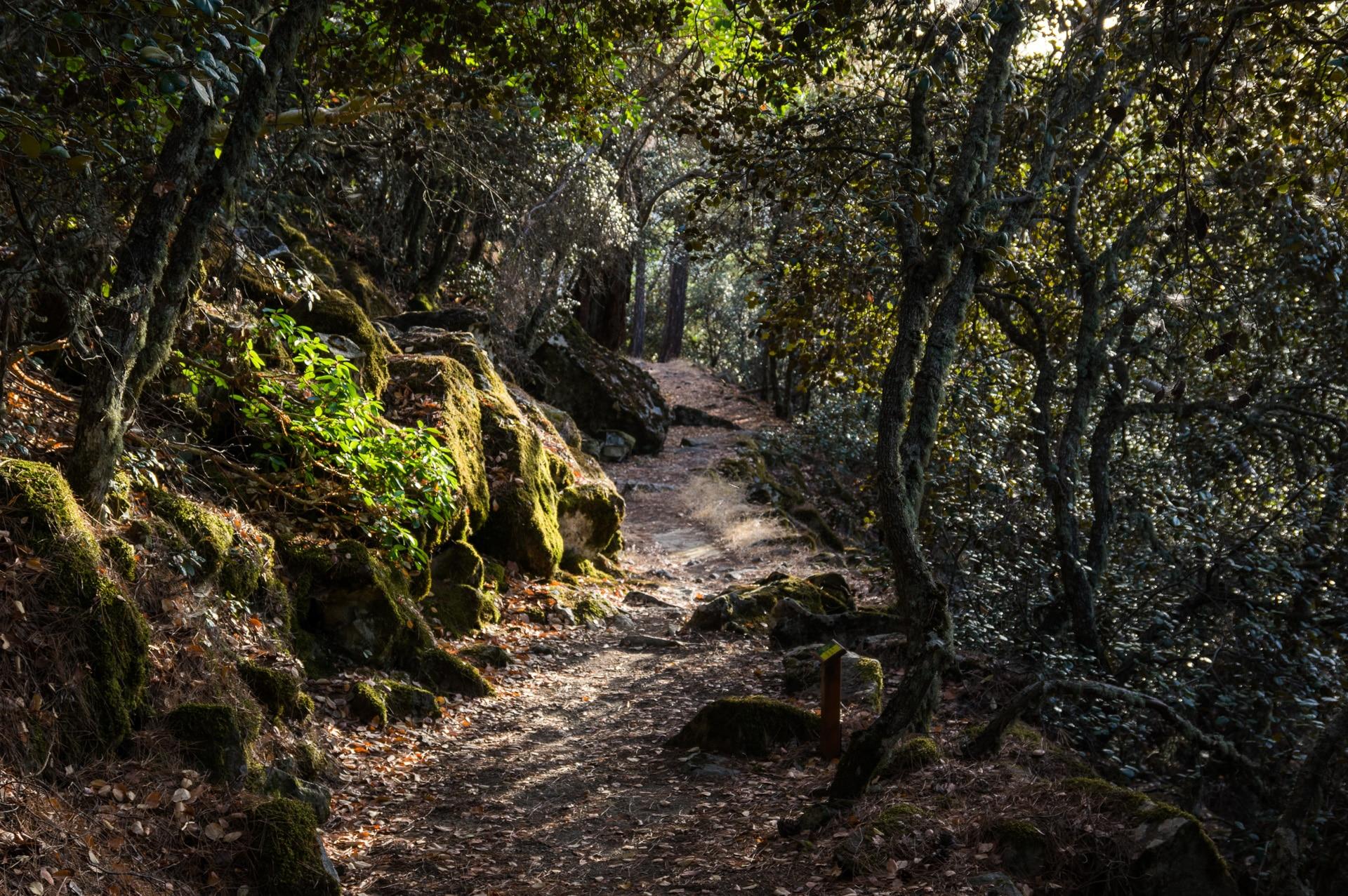 Madari Circular Trail in Cyprus