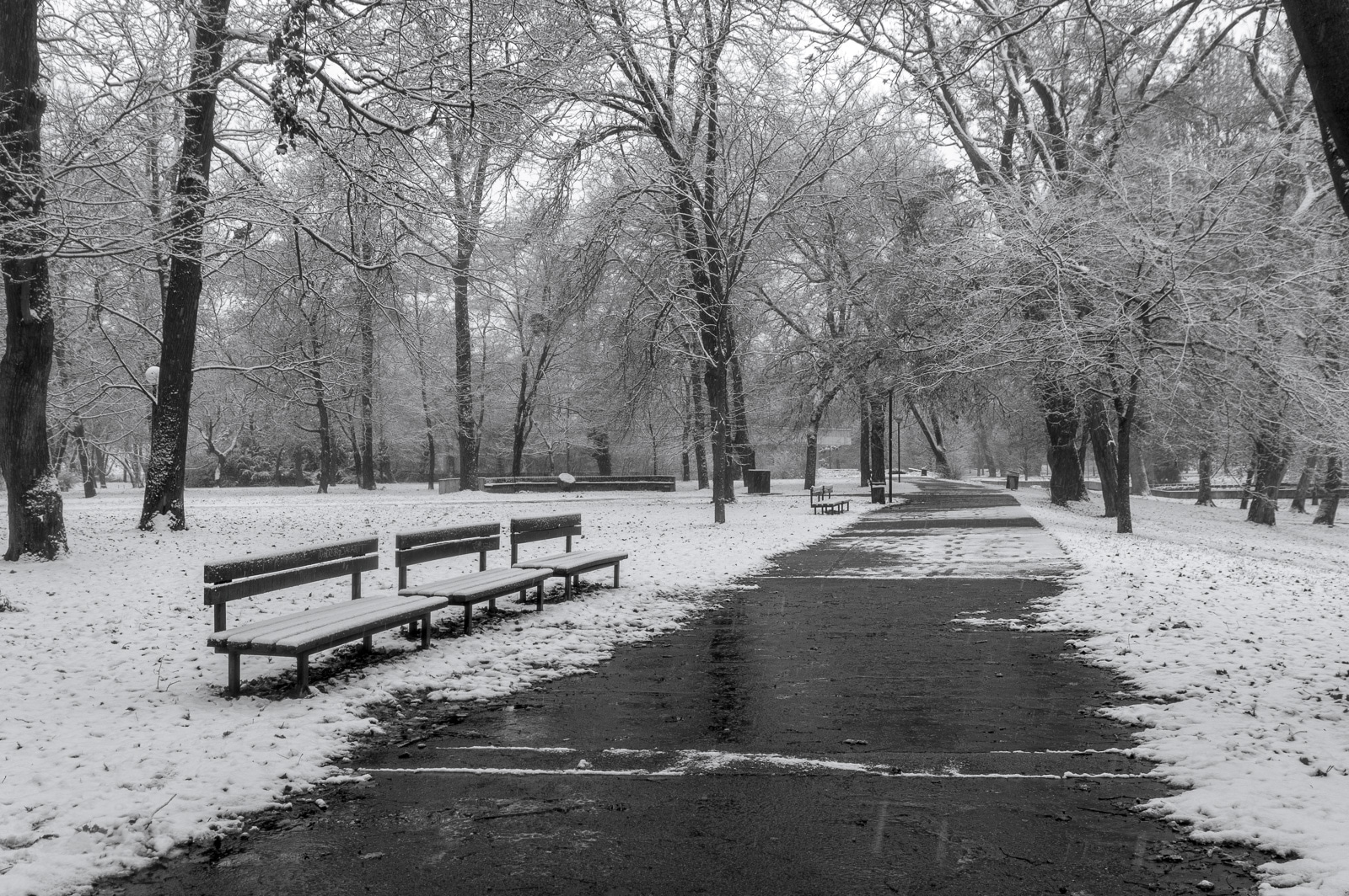 Sad Janka Krala park in Bratislava covered in the first snow of the year