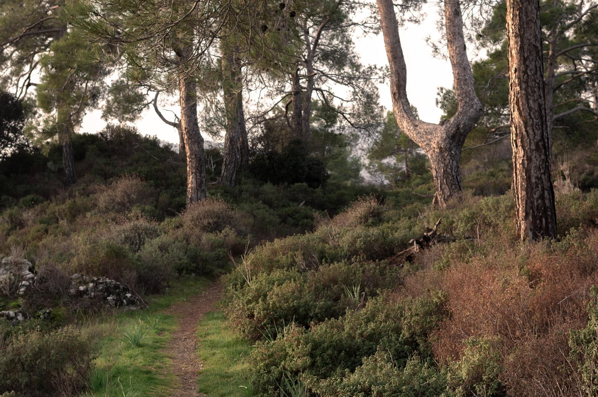 The trail of Kionia - Profitis ilias inside the woods