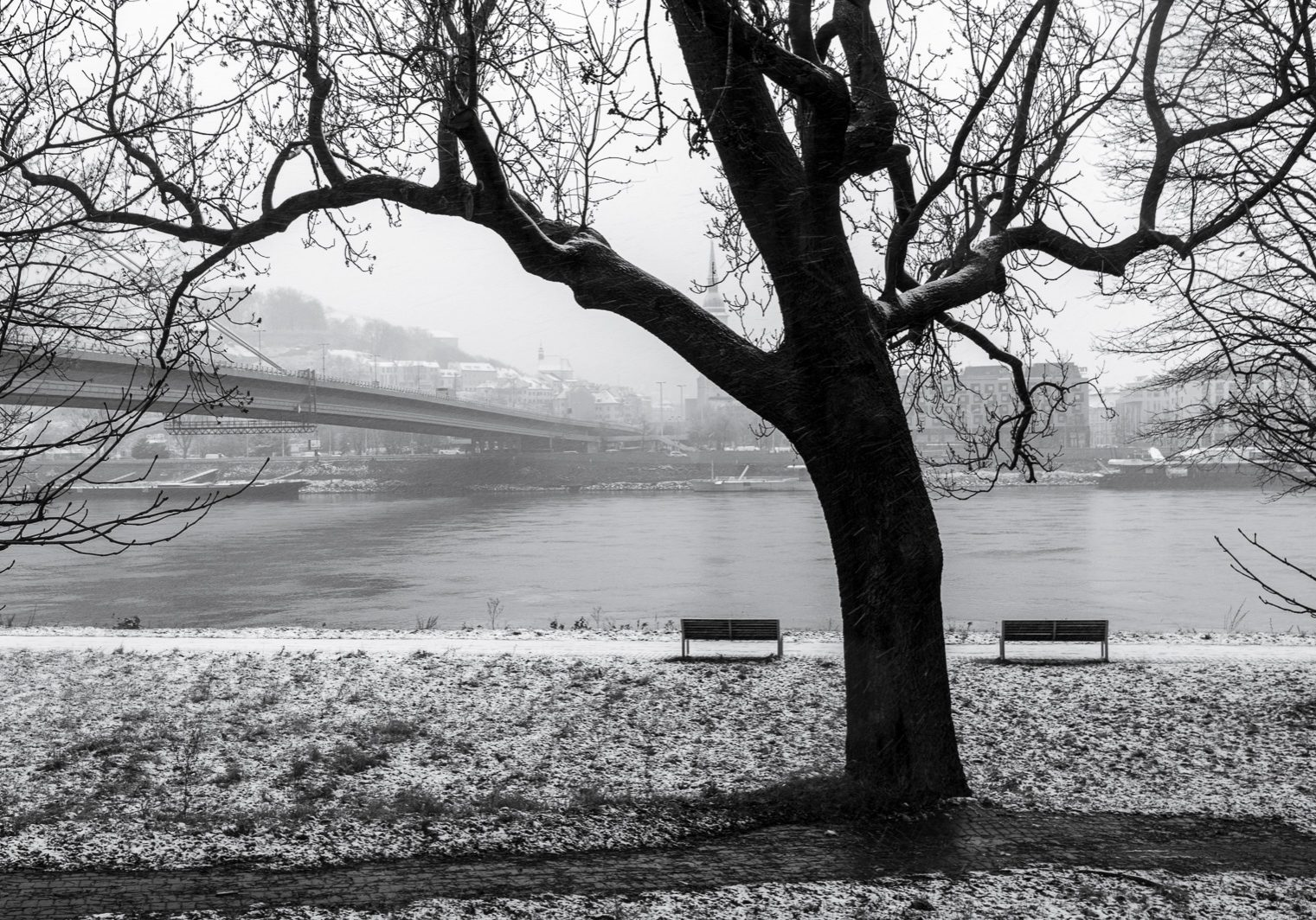 The silhouette of a tree with two benches and Danube river in the background